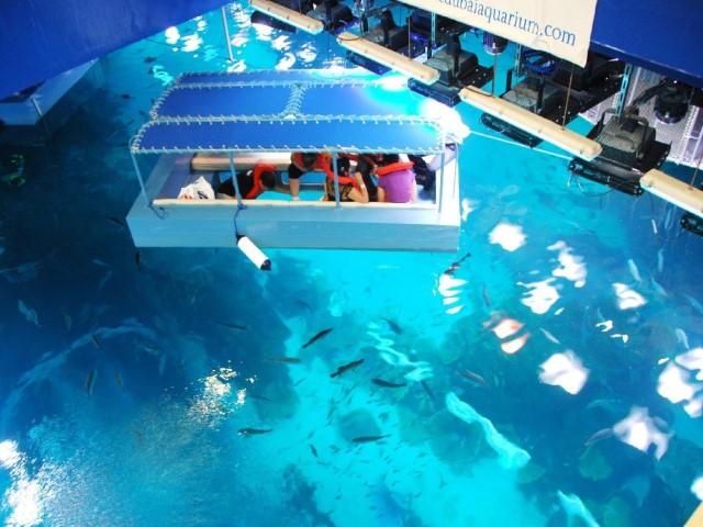 أوقات زيارة حوض الاسماك في دبي