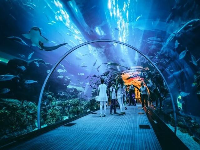 اكواريوم دبي: من أفضل 10 أماكن سياحية في دبي