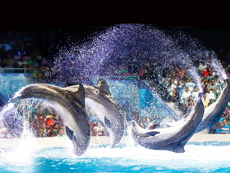 Dolphinarium Park