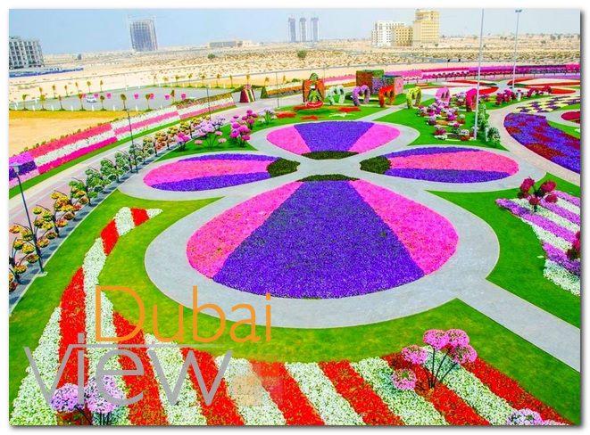 معلومات عن حديقة الزهور في دبي